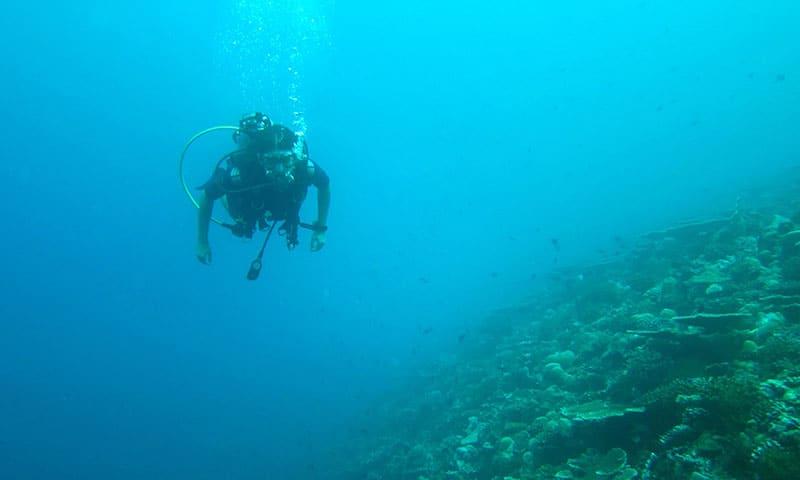 diving-261583